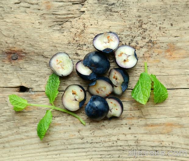 Hvite blåbær blogg