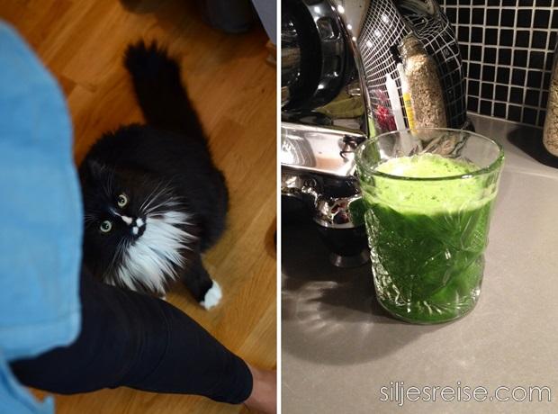 Grønn juice blogg