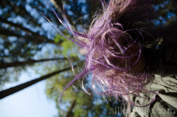 Blogg - Directions Haircolour purple-4